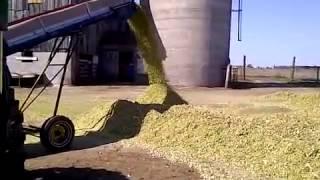 download lagu Making Cow Feed - Corn Silage gratis