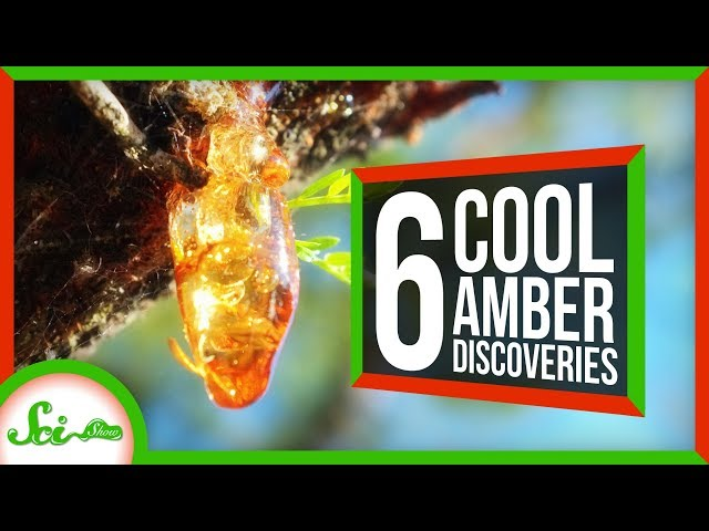 6 of the Coolest Things We've Found in Amber thumbnail