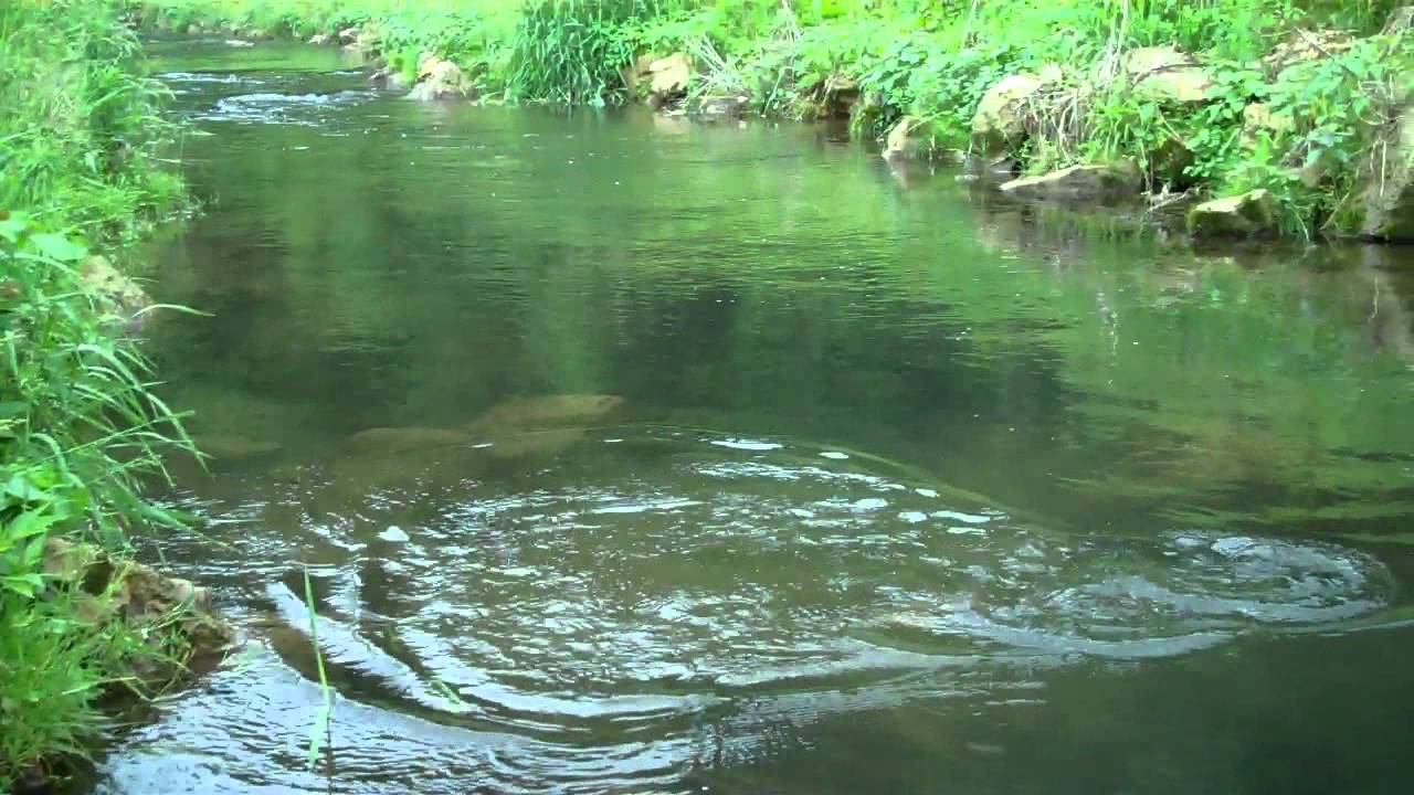 Fly fishing on a wisconsin spring creek in the driftless for Fly fishing wisconsin