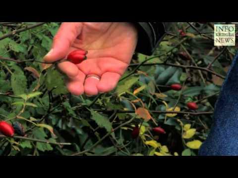 Schätze der Natur: Sammeln und erkennen   Dr. Markus Strauss (Interview)
