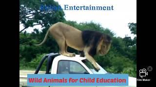 जंगली जानवरों का रहन सहन, Wild Animals hunting,