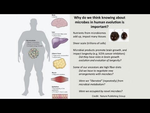 CARTA: The Evolution of Human Nutrition -- Steven Leigh: Diets and Microbes in Primates