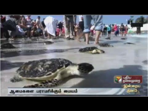 Turtles rehabilitation center activiies in Dubai
