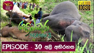 Sobadhara - Sri Lanka Wildlife Documentary | 2019-10-18 Mystery of Death Elephants