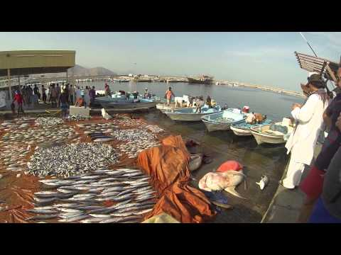 Shark fishing - Musandam. Oman