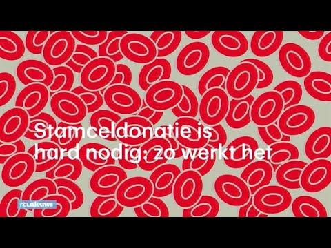 Stamceldonatie is hard nodig: zo werkt het - RTL NIEUWS