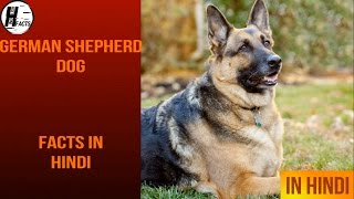 German Shepherd Dog Facts | Hindi | Dog Facts | HINGLISH FACTS