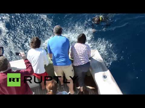 USA: Lazarus, the turtle who died TWICE, released into the wild