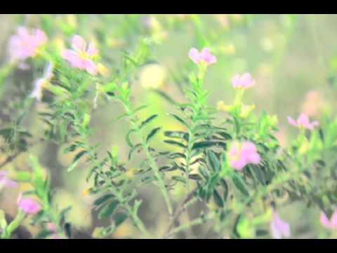 Milky Summer - Nahihibang Papap