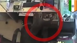 Monkey robs jewelry store: Primate pulls off epic cash heist in India  - TomoNews