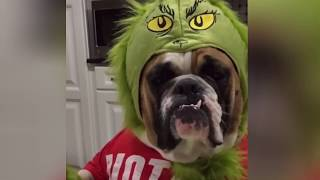 Cute Funniest Pet Dog Animal Short Compilation Video | Funny Dog and Cat Videos