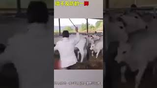 Funny chinese animals