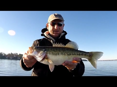 Perch, Bass, and Hybrids, Lake Norman, Dec 13, 2014 1080 HD