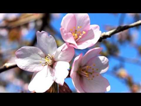 フルート 『花』