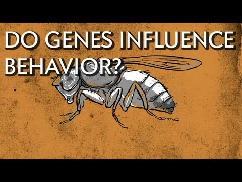 How Do Genes Influence Behavior? - Instant Egghead