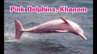 The Pink Dolphins of Khanom