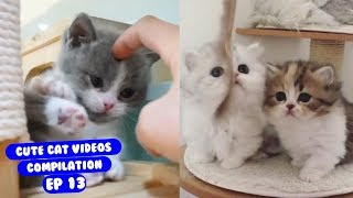 Cute Cat Videos Try Not to Laugh or Grin Ep 13