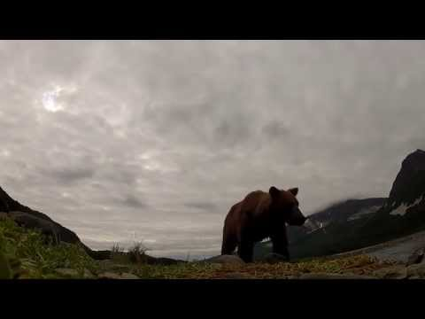A GRIZZLY ATE MY GOPRO, WITH AUDIO!!!!! GoPro HD, Brad josephs