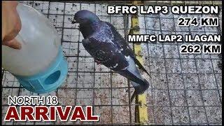 BFRC LAP3 QUEZON 274KM MMFC LAP2 ILAGAN 262 KM ARRIVAL RACING PIGEON