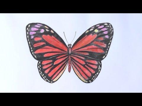 Уроки рисования. Как нарисовать бабочку