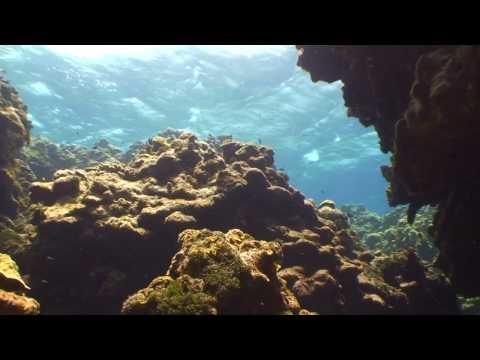 SVI - Devils Grotto - Grand Cayman Island Scuba Diving