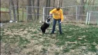 """Shadow""- Aussie - Loves to Play -- April 27 2009"