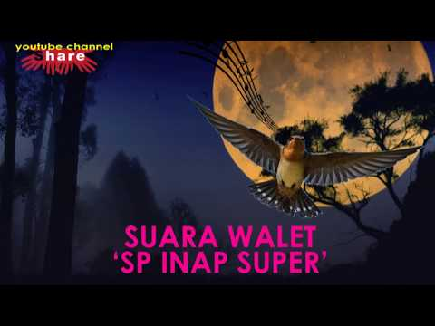 SUARA WALET 'SUARA INAP SUPER'