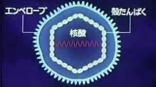 驚異の生体防御(1)