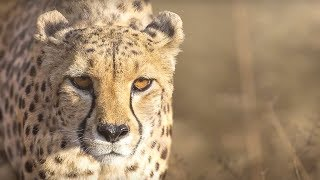 Deadly Predators from The Hunt - Earth Unplugged