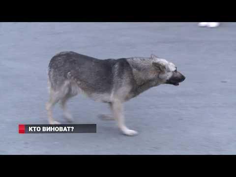 Собаки нападают на людей во Владивостоке