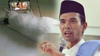 Video Viral, Begini Jadinya saat Seekor Kucing Tonton Ceramah Ustad Abdul Somad