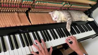 Your lie in April Piano Meowssage