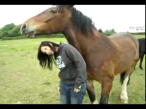 horse having a scratch Music Videos