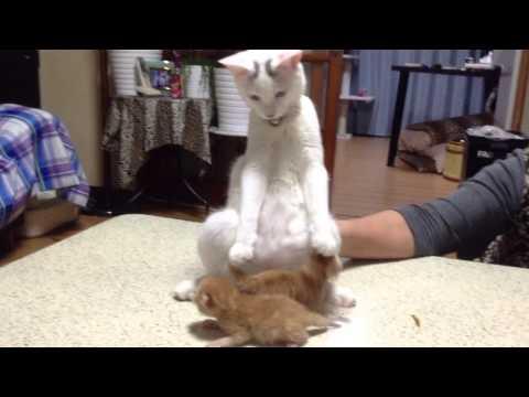 赤ちゃん猫に怯える猫