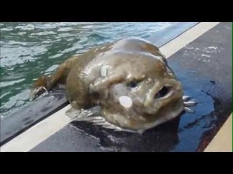 Animales marinos más raros del mundo