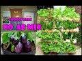 #TIS#CARA Bikin Nutrisi HIdroponik Sendiri+Aplikasinya !![DIY Hydroponic Nutrients] English SUB MP3