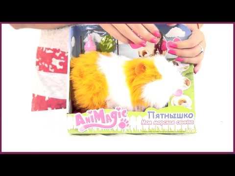 Пятнышко - Моя морская свинка - видео NofolloW.Ru