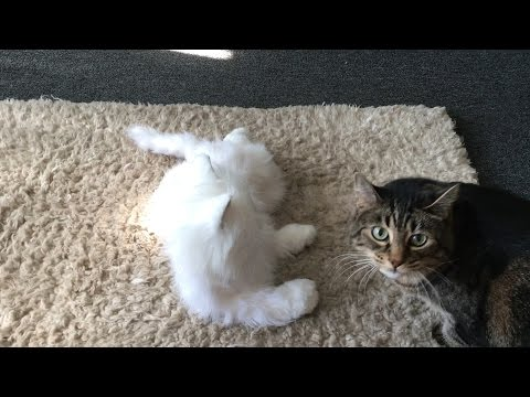 ナニコレ欲しい!リアルな猫型ロボットを猫に会わせてみた♪・・・みんな警戒w