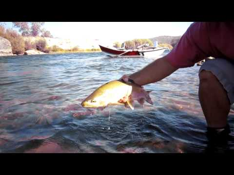 Fly Fishing the Yuba River