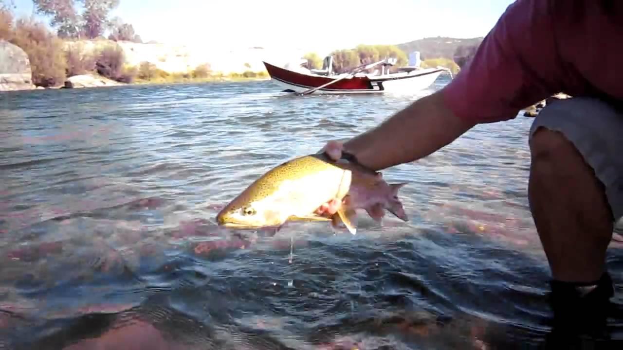 Fly fishing the yuba river youtube for Yuba river fishing report