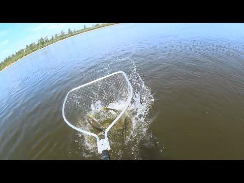 Трофеи Вятки 2016 | Рыболовные соревнования | 2 тур | 1080p | BF-№ 52