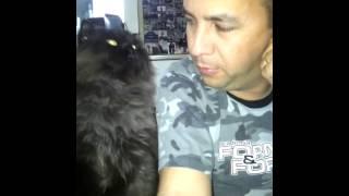 Cat Demands More Petting!