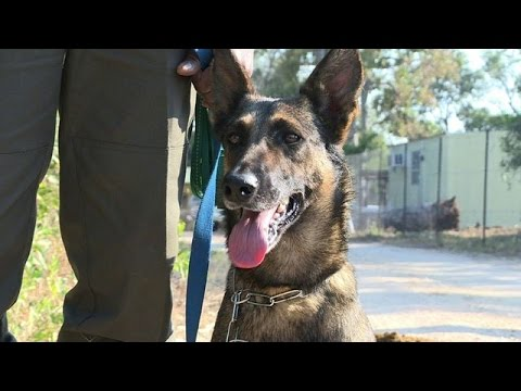 S.Africa's top poacher-hunting pooch flies into battle