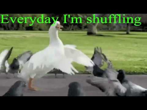 Everyday I'm Shuffling - Goose video