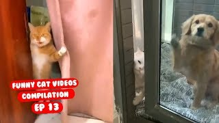 Funny Cat Videos Try Not to Laugh or Grin Ep 13