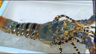 Lobster Raksasa Seharga 2,7 Juta Rupiah | HITAM PUTIH (13/11/18) Part 3