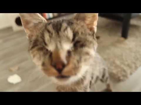 盲目の猫バンブー君がご主人様と遊ぶ幸せそうな姿にほっこり♪