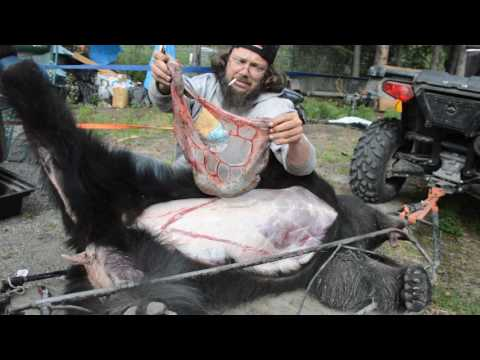 How to Skin out a Black Bear for a Rug Mount Part 4 Alaskan Spring Black Bear 2017 thumbnail