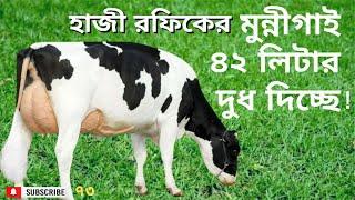 Successful Golden Dairy, ৪২ লিটার দুধের মুন্নিগাই নিয়ে দেশে একমাত্র ডেইরি খামার করেছে - হাজী রফিকুল