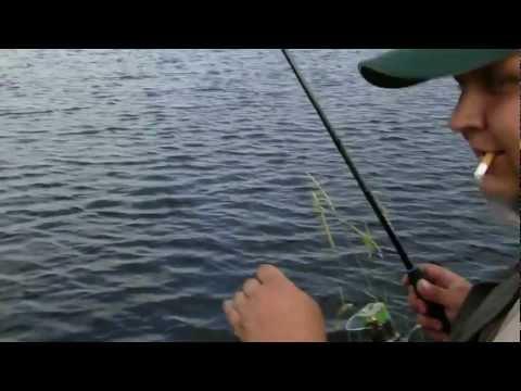 ловить плотву на тину